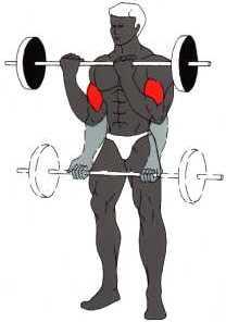 مجموعة تمارين لتقوية عضلات الظهر و الصدر و الكتفين Biz_01