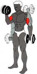 مجموعة تمارين لتقوية عضلات الظهر و الصدر و الكتفين Biz_02