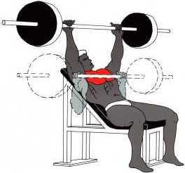 trainingsbedingungen fitness first studien