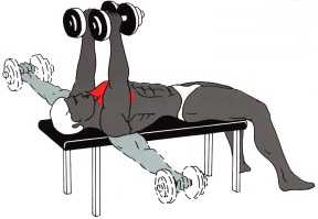 Gemeinsame Bodybuilding Übungen für Bizeps, Trizeps und Brust #QF_05