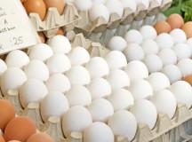 Eier morgens, mittags, abends – alles nur Show oder wirklich erfolgversprechend?